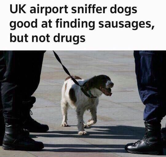 Photo of a dog under the caption: UK airport sniffer dogs good at finding sausages, but not drugs
