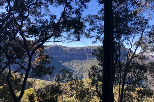 Photo of the Blue Mountains through some sillouetted Australian trees in the foreground.