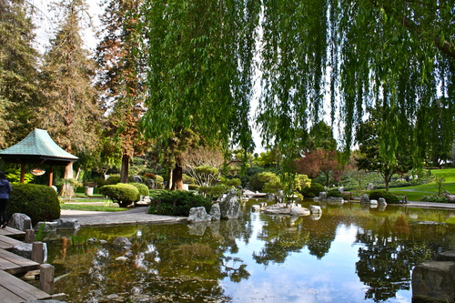 Photo of the Lower Pond in the Japanese Friendship Garden