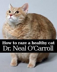 How to Raze a Healthy Cat by Neal O'Carroll of IntoYourHead.com