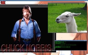 Chuck Norris Llamas