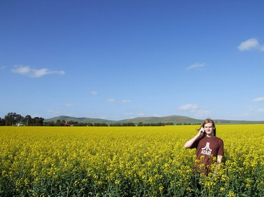 Photo of me attempting to make a phone call and look philosophical in the middle of a gigantic canola field