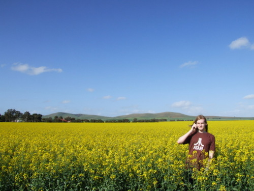Phone reception in canola fields isn't as good as you would expect.